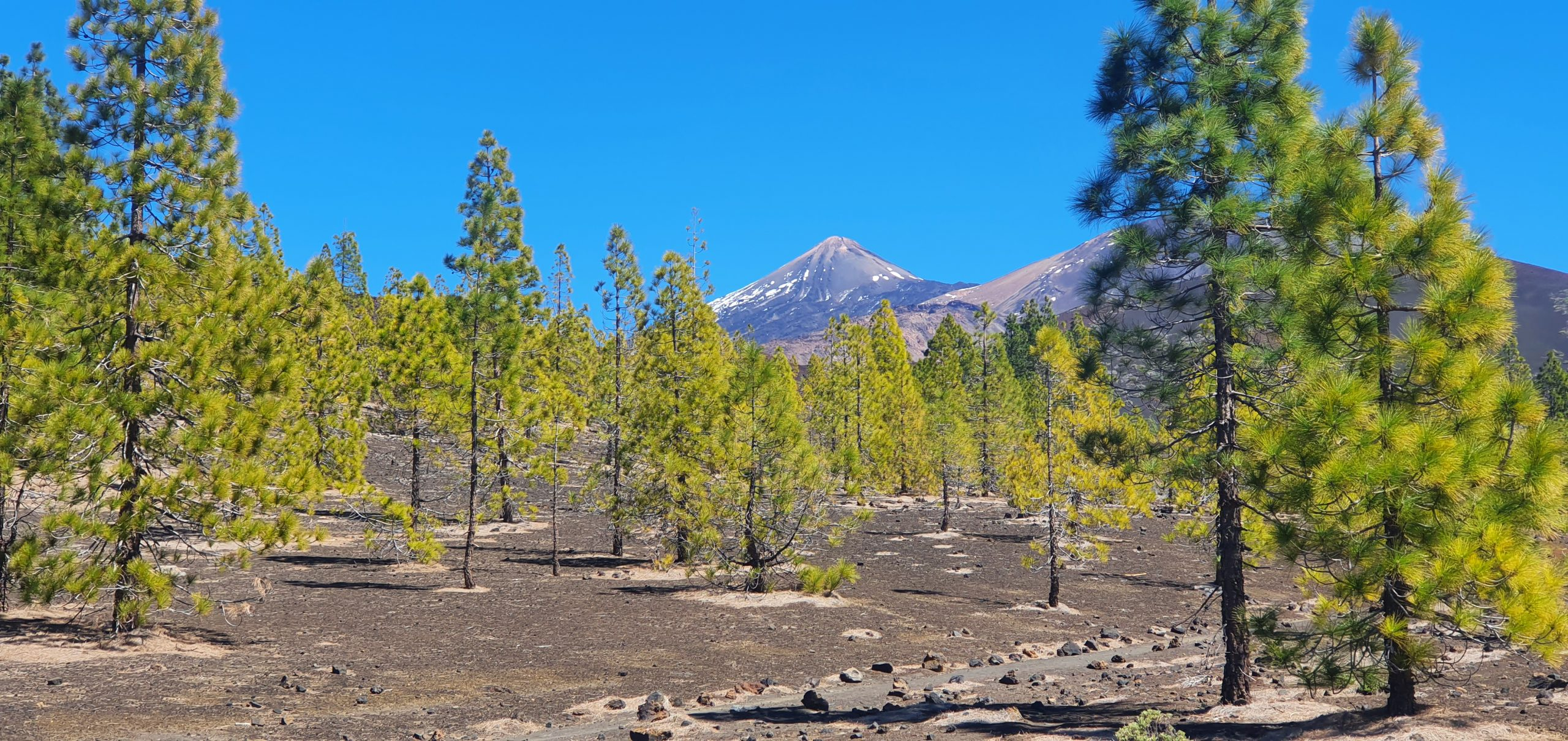 parc national teide
